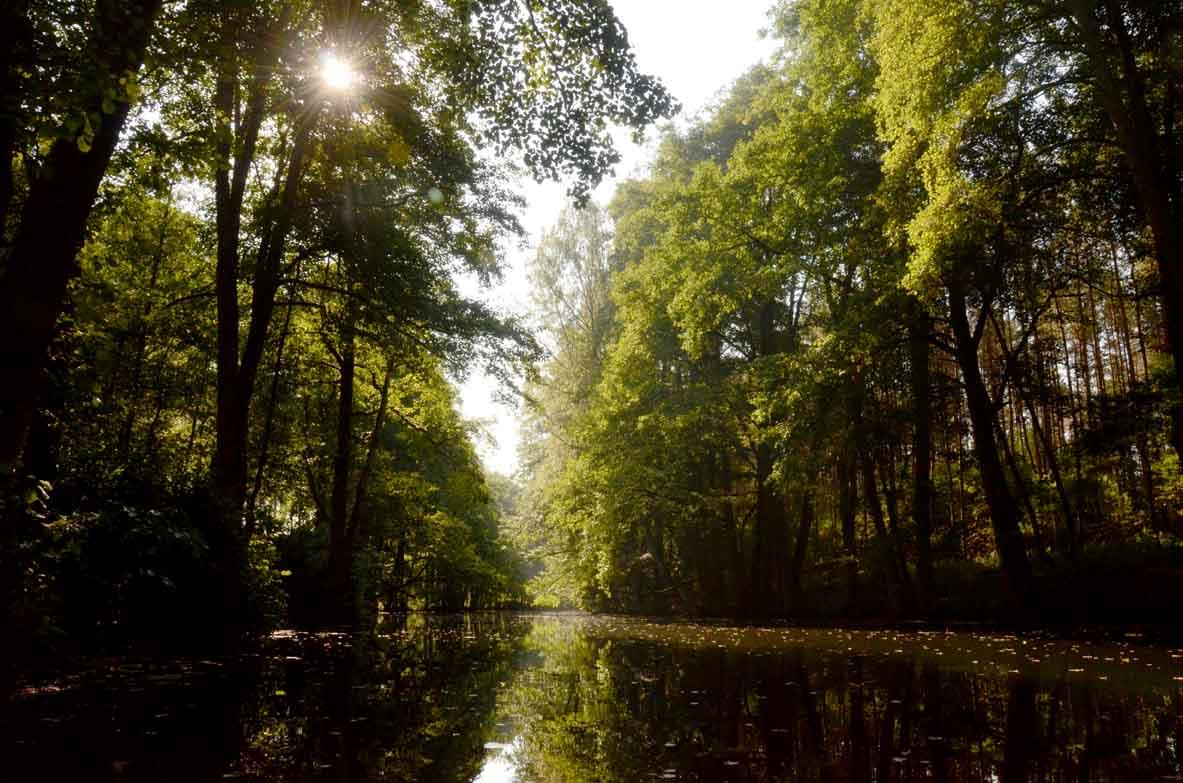 lasy nabrzeżne